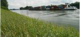 Umweltfreundliche Uferbefestigung aus nachwachsenden Rohstoffen im Praxistest am Rhein